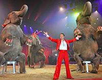 In città arriva il circo con gli animali, insorgono animalisti e istituzioni
