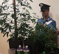 """A Fregene il """"giardino"""" della droga: arrestata una coppia"""
