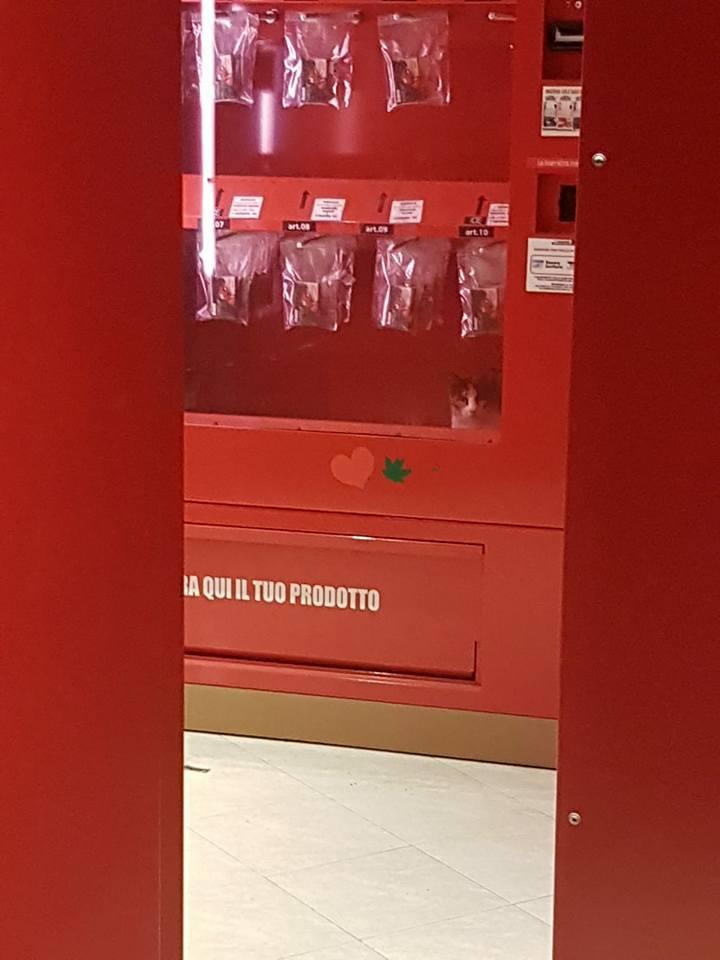 Salvato un gattino intrappolato in un distributore automatico