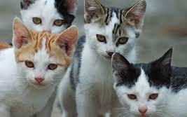 Scompaiono colonie di gatti: sette sataniche nel mirino