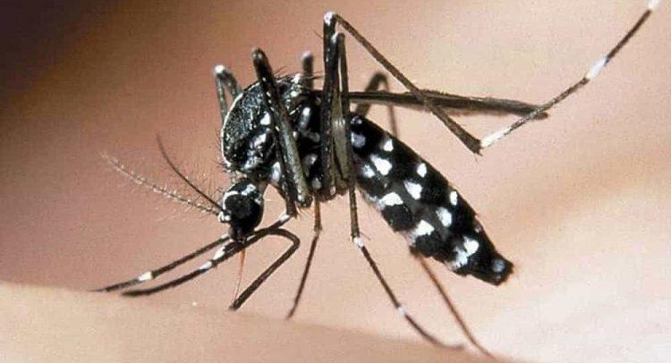 Parte il piano di disinfestazione contro le zanzare nel territorio
