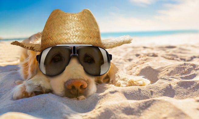 Anche i cani in spiaggia lo dice il Tar