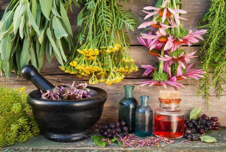 Al Granarone ''Piante e essenze – Introduzione didattica agli oli essenziali''