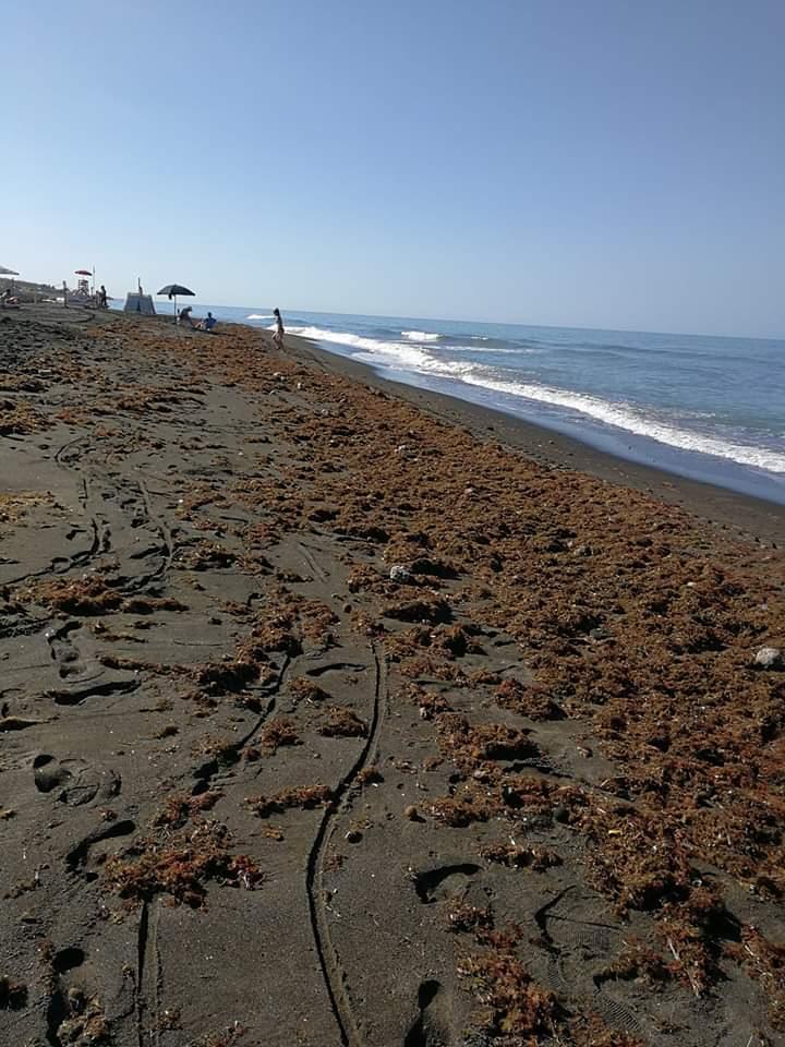 «Spiagge ''invase'' dalla Posidonia, argine contro l'erosione»