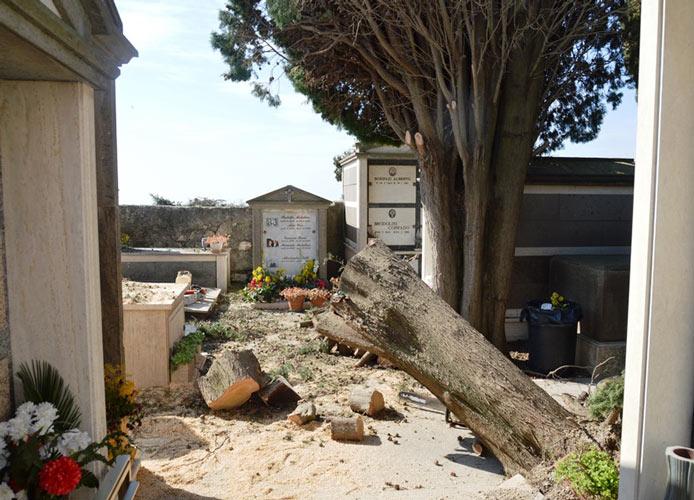 Cimitero, operai ancora al lavoro per rimuovere i cipressi
