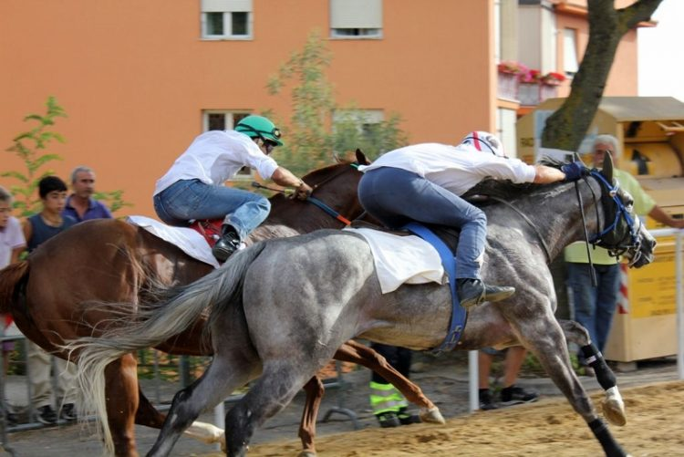 Partita la corsa dei cavalli purosangue