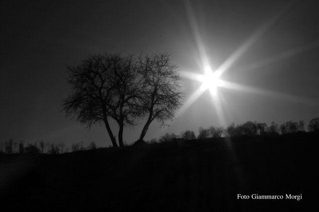 Albero della luce (foto Giammarco Morgi)
