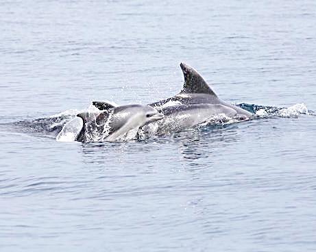 Avvistata una colonia di delfini