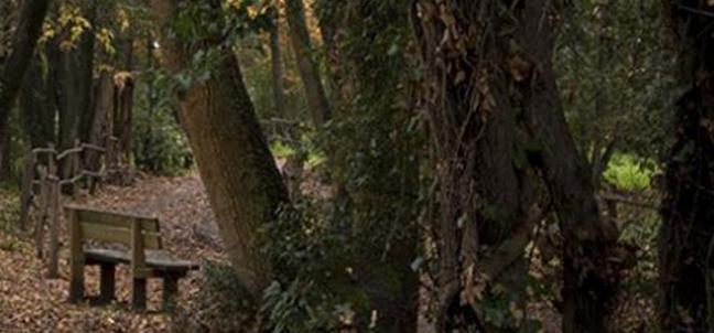 Ladispoli, oggi riapre il bosco di Palo