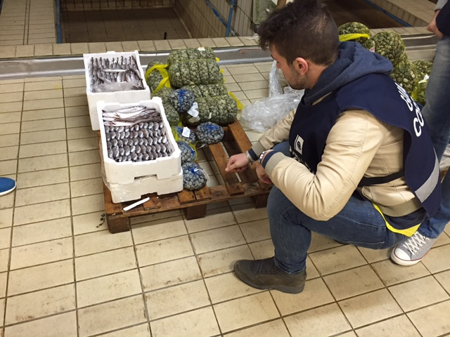 Controlli sulla pesca: sequestrati 70 kg di novellame
