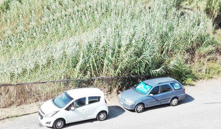 Una ''foresta'' in via delle Mimose: i residenti chiedono un intervento urgente