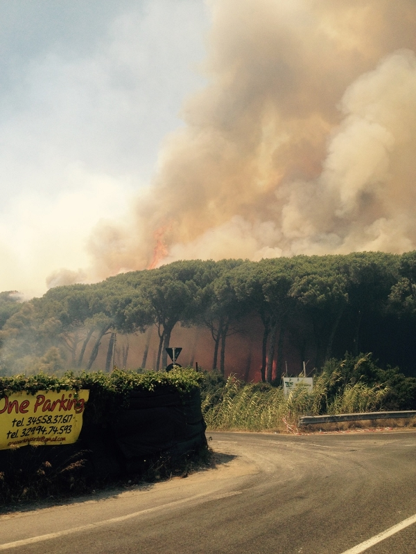 Fiumicino: ettari di terreno in fiamme