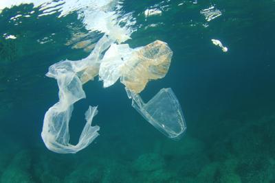 Henderson, l'isola da sogno sepolta dalla plastica