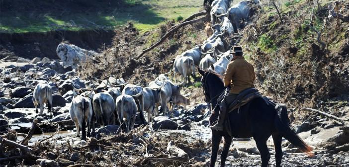 Tre giorni di cammino antico e universale di popoli e animali