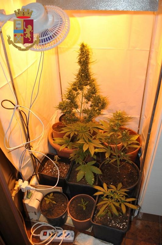Coltivava marijuana in casa, denunciato