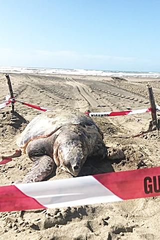 ''Caretta-caretta''uccisa da una tanica killer