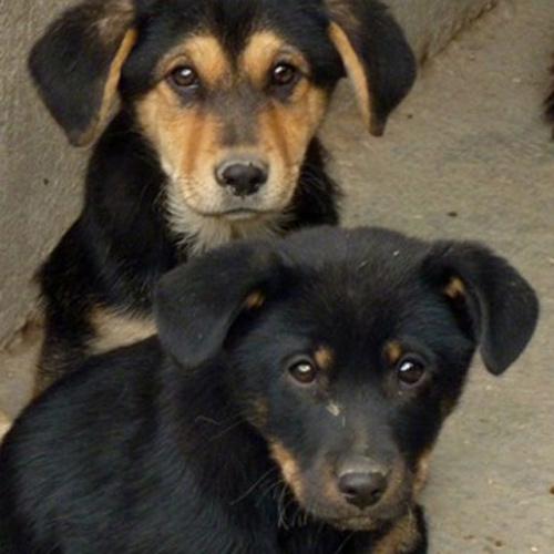 A Santa Marinella Tasi attenuata per chi adotterà un cane