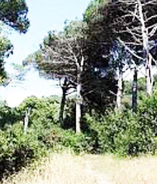 Colpito da infarto mentre raccoglie asparagi nel bosco