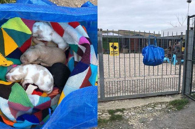 Abbandonati 4 cuccioli in una busta di plastica