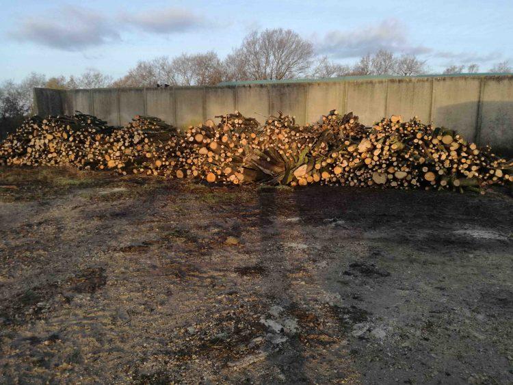 Agraria Tarquinia, legna da ardere: via alla vendita