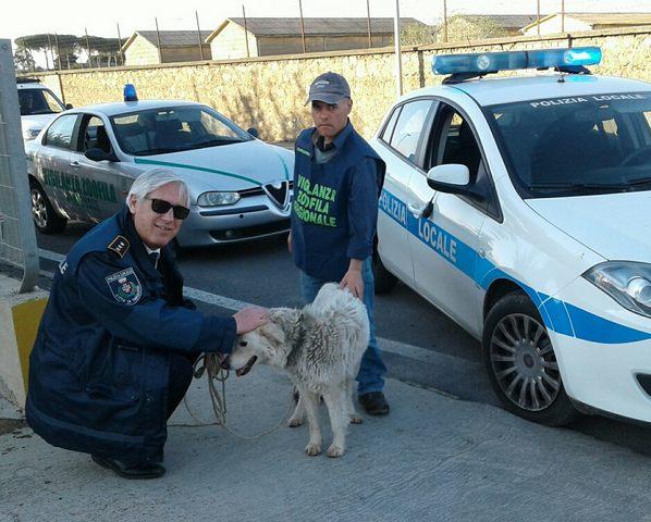 Cane smarrito salvato dalla Polizia locale e dai volontari Aeopc