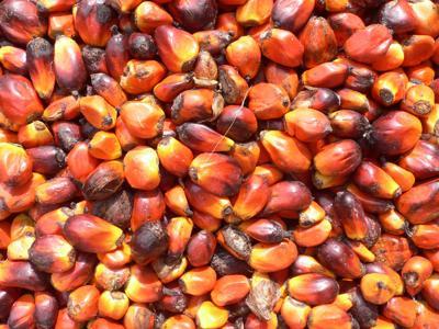 Olio di palma? Solo sostenibile
