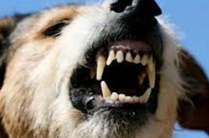Ladispoli, pastore tedesco azzanna jack russel e lo uccide