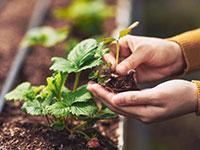 Ambiente e Economia: gli orti urbani fanno bene