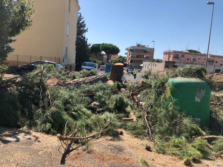 """Taglio alberi via Montanucci, Pd: """"Uffici Ambiente non interpellati"""""""