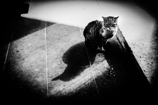 Guardami (foto Elisa La Malfa)