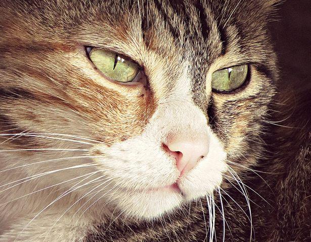 Il gatto (foto Monica Volpi)