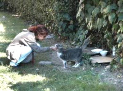 Guerra alle colonie feline di S. Marinella