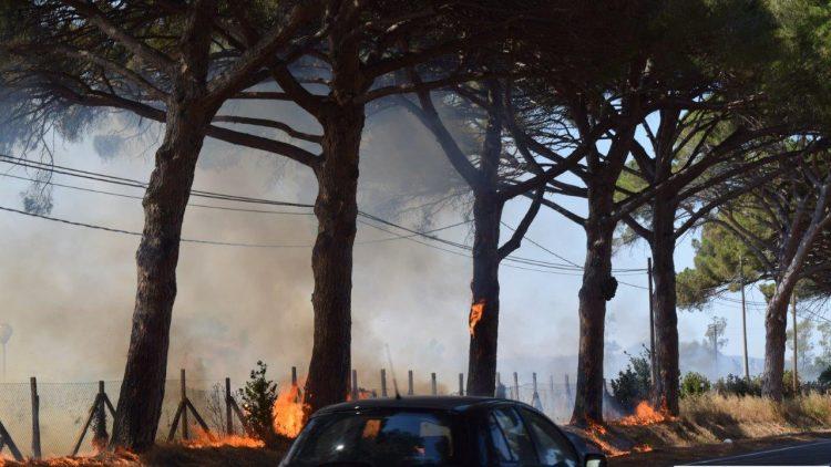 Ladispoli, Anas pronta a rimuovere i pini dall'Aurelia
