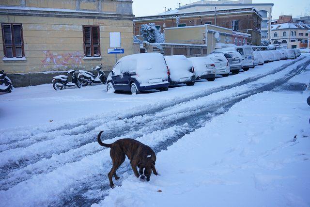 Neve e gelo: scuole aperte a Civitavecchia