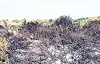 Capocotta, incendiata la riserva dei nudisti