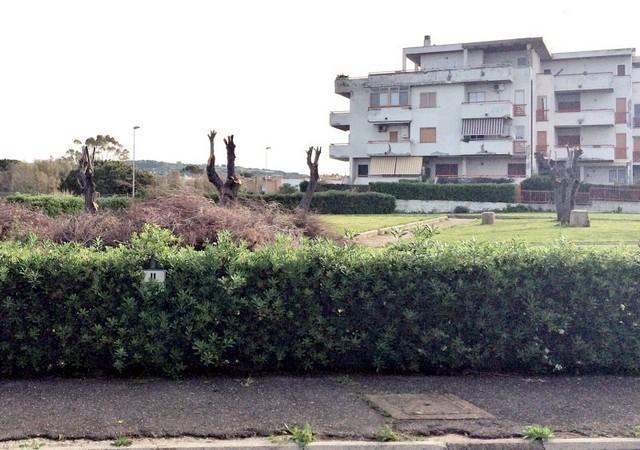 ''Parco Maiorca: la potatura delle piante un vero scempio''