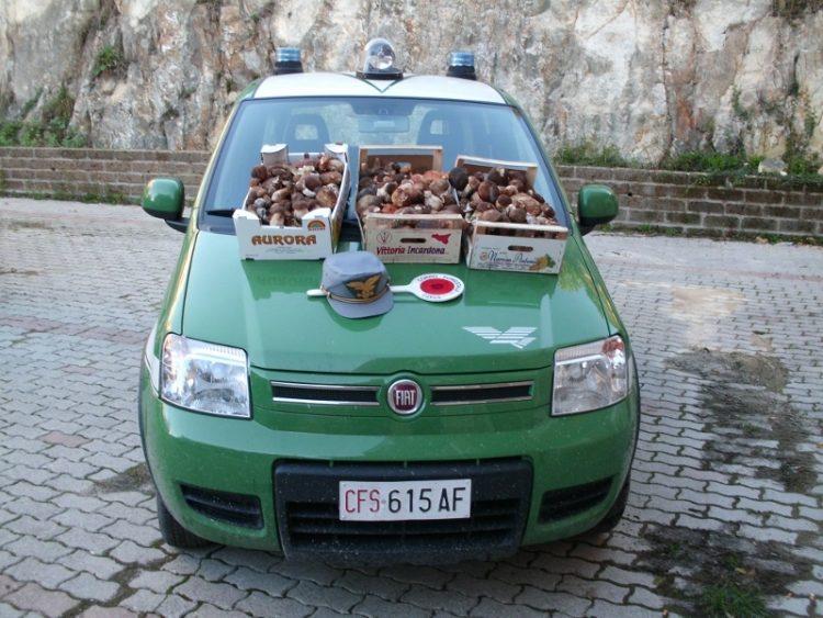 Altro sequestro di funghi ad opera della Forestale
