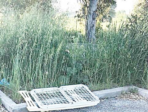 Via Galtelli, l'erba ''sfratta'' i bambini