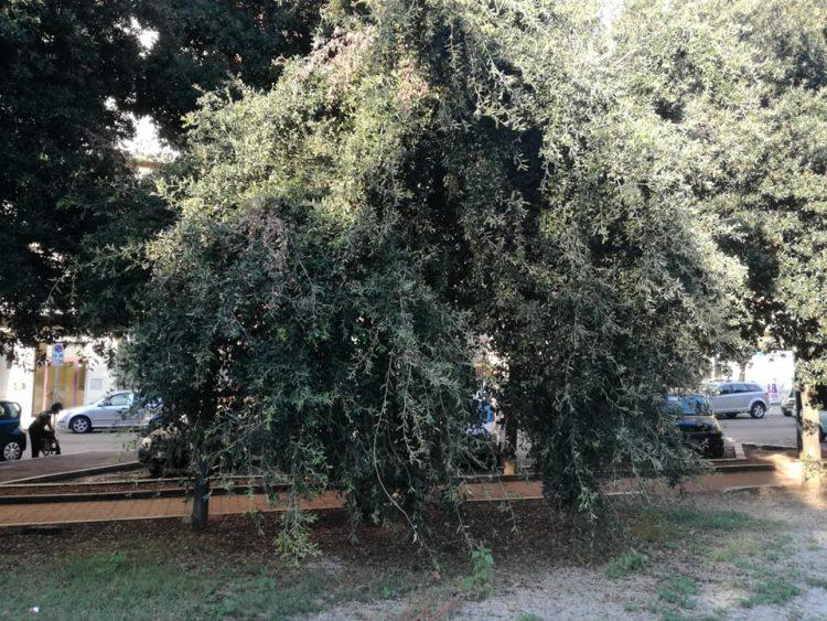 «A quando la potatura degli alberi in via Ancona»