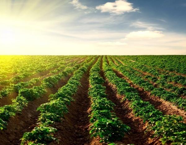 Lunedì al Granarone il convegno ''Multifunzionalità: Terra fertile per l'evoluzione dell'azienda agricola''