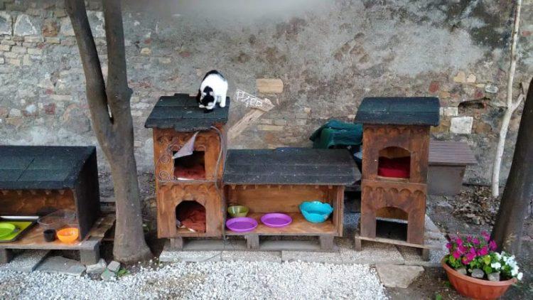 Nuove cucce per i piccoli felini che abitano al castello di Santa Severa
