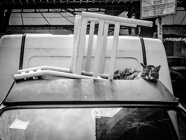 La sedia e il gatto (foto Elisa La Malfa)