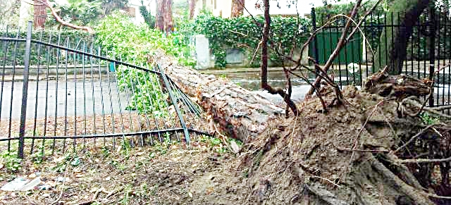 Fregene, pino si schianta in strada