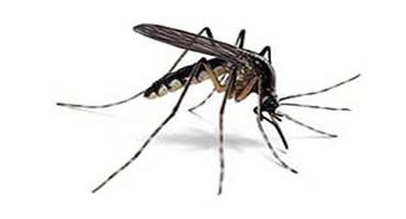 Nuova disinfestazione per zanzare e insetti