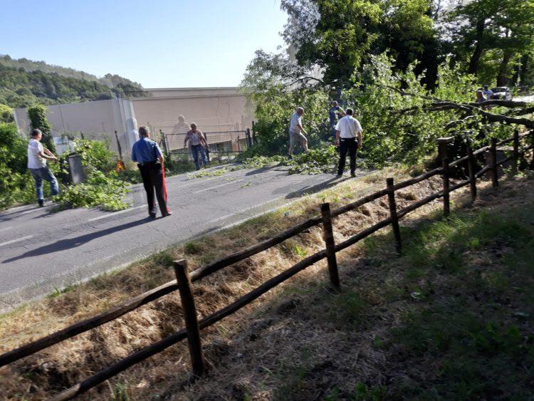 Albero si abbatte sulla strada: interrotto il collegamento tra Tolfa ed Allumiere