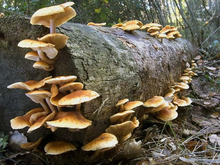 Volpi dice no alla tassa per la raccolta funghi
