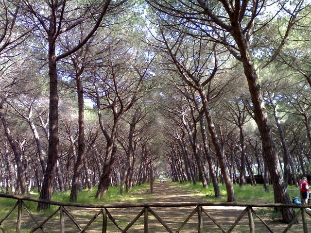 Tarquinia, al setaccio le pinete dell'Agraria per la rimozione dei rifiuti