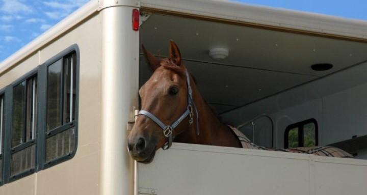 Niente documentazione valida per il trasporto animali: sanzionati
