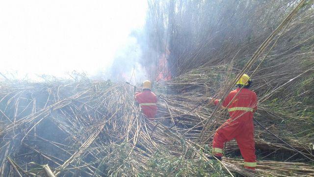 Vasto Incendio in località Poderino a Tarquinia