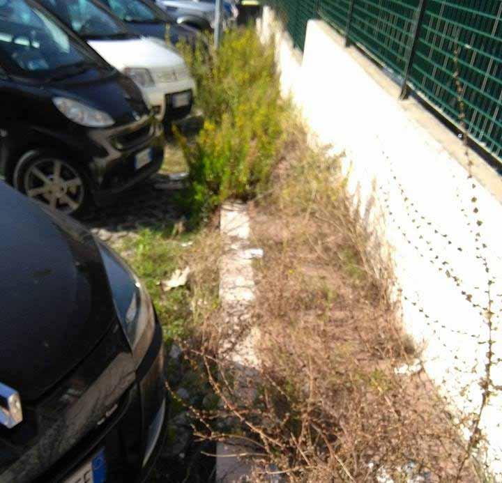 Sfalcio dell'erba: vertice al Pincio